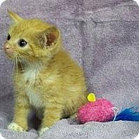 Adopt A Pet :: Steve - Secaucus, NJ