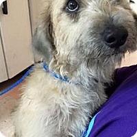Adopt A Pet :: Jack - Pembroke pInes, FL