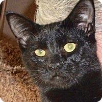 Adopt A Pet :: Eli - Colmar, PA