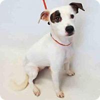 Adopt A Pet :: SHYLA - Sanford, FL