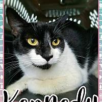 Adopt A Pet :: Kennedy - Edwards AFB, CA