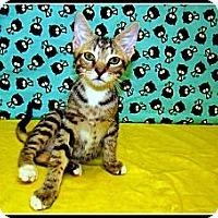 Adopt A Pet :: Scrappy Doo - Orlando, FL