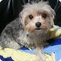 Adopt A Pet :: Fefe - pasadena, CA