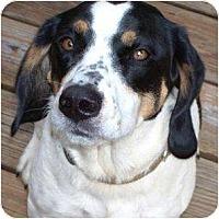 Adopt A Pet :: ANNIE - Wakefield, RI