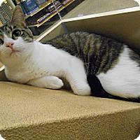 Adopt A Pet :: Sydnee - Chattanooga, TN