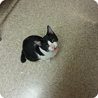 Adopt A Pet :: Pecan - West Dundee, IL