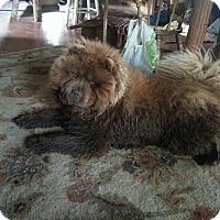 Adopt A Pet :: Asia - Chewelah, WA