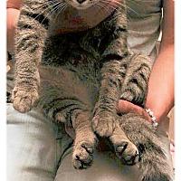 Adopt A Pet :: TINA - Olmsted Falls, OH