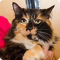 Adopt A Pet :: Aimee - Irvine, CA