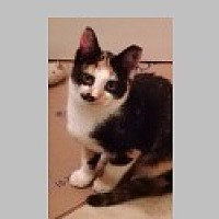 Adopt A Pet :: Bandit - Pittsboro, NC