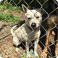 Adopt A Pet :: Kassie - Acushnet, MA