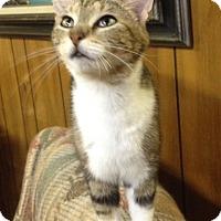 Adopt A Pet :: Polli - Covington, KY