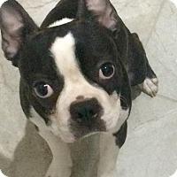 Adopt A Pet :: Monty - Jackson, TN