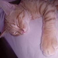 Adopt A Pet :: Peete - St. Cloud, FL