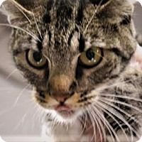 Adopt A Pet :: Greenlee - Daytona Beach, FL
