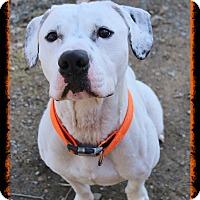 Adopt A Pet :: Axel - Shippenville, PA