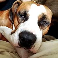 Adopt A Pet :: Hugglemonster - Westminster, MD