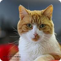 Adopt A Pet :: Jim - Edwardsville, IL