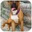 Photo 1 - Boxer Mix Dog for adoption in Albany, Georgia - Emmett