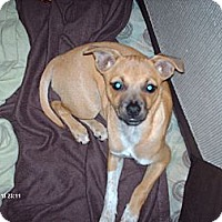Adopt A Pet :: Chloe - Franklin, IN