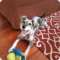Adopt A Pet :: Sammie- Video! - Houston, TX