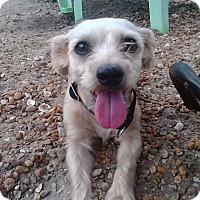 Adopt A Pet :: SARA - Boca Raton, FL
