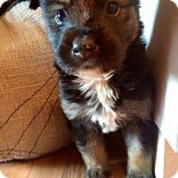 Adopt A Pet :: Hayden - Saskatoon, SK