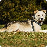 Adopt A Pet :: KIMA - Ile-Perrot, QC