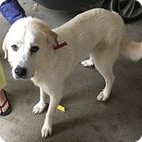 Adopt A Pet :: Hope LGD - Kyle, TX