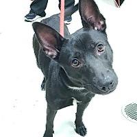 Adopt A Pet :: Eclipse - Decatur, AL