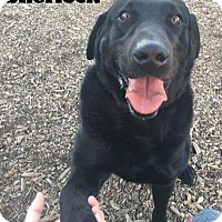 Adopt A Pet :: Sherlock - Foster Needed - kennebunkport, ME