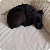 Adopt A Pet :: Rosie - Columbia, TN