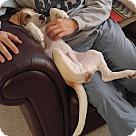 Adopt A Pet :: Georgie