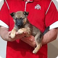 Adopt A Pet :: Rocky - South Euclid, OH