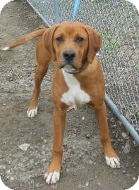 Hound (Unknown Type) Mix Dog for adoption in Gary, Indiana - Harry