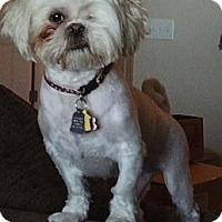 Adopt A Pet :: Collins - Denver, CO