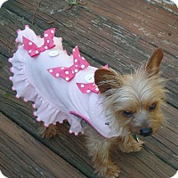 Adopt A Pet :: Tsula - Suwanee, GA