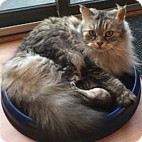 Adopt A Pet :: Emmy-Super Senior - Arlington, VA