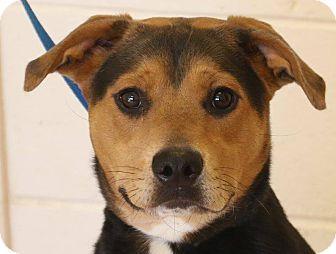 Hound (Unknown Type) Mix Dog for adoption in McDonough, Georgia - Zana