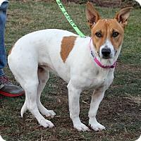 Adopt A Pet :: Vida - Harrison, NY