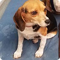 Adopt A Pet :: Carol Ann - Richmond, VA
