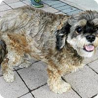 Adopt A Pet :: Peanut - Umatilla, FL
