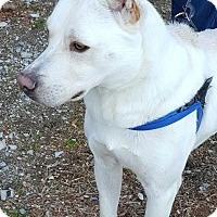 Adopt A Pet :: Dex - Henderson, KY