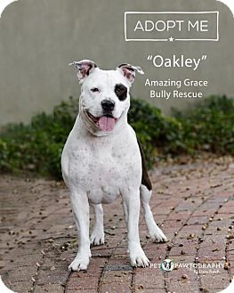 Terrier (Unknown Type, Medium) Mix Dog for adoption in Pensacola, Florida - Oakley
