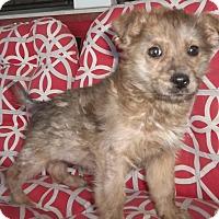 Adopt A Pet :: Jeeves - Memphis, TN