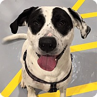 Adopt A Pet :: Lucy - Seattle, WA