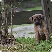 Adopt A Pet :: Matt - Groton, MA