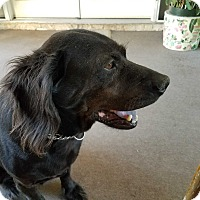 Adopt A Pet :: BAILEY - San Dimas, CA