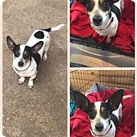 Adopt A Pet :: Dolly - Longview, TX