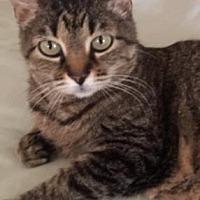 Adopt A Pet :: April Rose - Santa Fe, TX